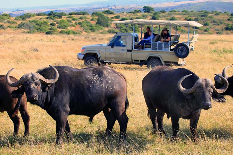 Cape Town | 2-Day Wildlife And Safari Small-Group Tour